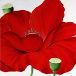 RED POPPIE ON WHITE