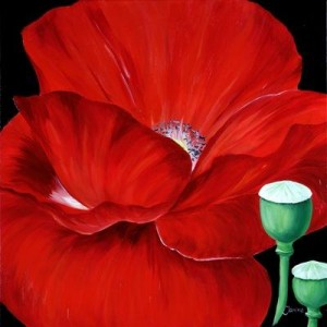 RED POPPIE IN THE DARK