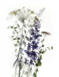 Delphinium and Onion Flower