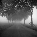 Misty morning road